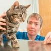 Antennát nyelt egy tévéimádó macska