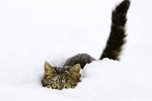 Bizonyíték, hogy a cicák is szeretik a havat!