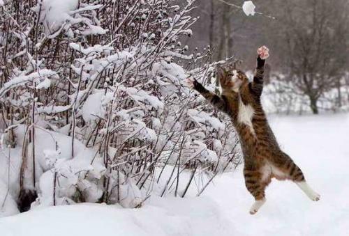 macska_jatszik_a_hoban