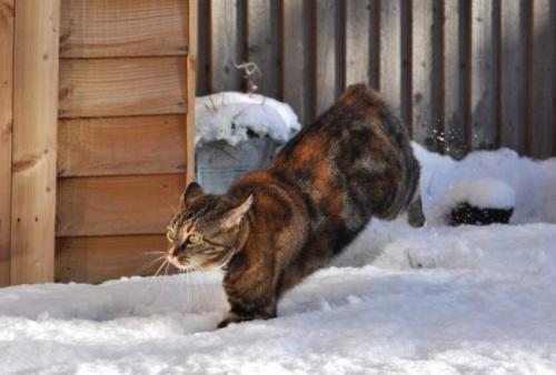 macska_jatszik_a_hoban10