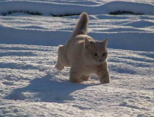 macska_jatszik_a_hoban7