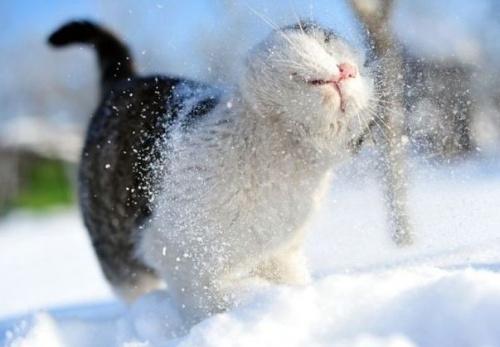 macska_jatszik_a_hoban9