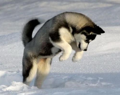 havas_kutya2