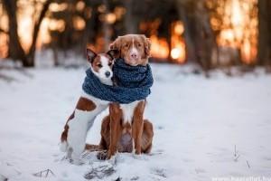 A legaranyosabb havas kutyás képek!