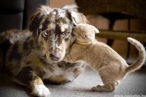 A macska piszkálja a kutyát
