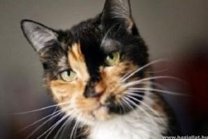 Háromszáz kilométerről hazatalált egy macska