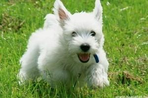 Adócsaló kutyatenyésztőt ellenőrzött a NAV