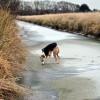 Kutyamentés jégből - baleseti bemutató a Dunán