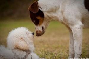 A kutyák képesek felismerni fajtársaikat fotók alapján