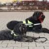 Újabb hallássérült-segítő kutyák állhatnak munkába Magyarországon