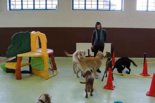 kutyaovi3