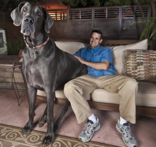 dan_dog_kutya