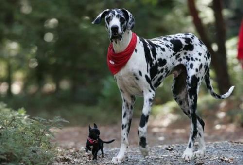 nagy_kutya_kis_kutya