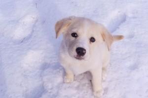 Kutya hidegben mit tegyek?
