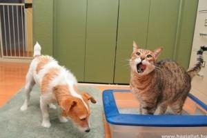 Kutya eszik a macskavécéből