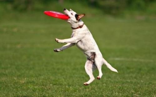 kutyas-frizbi2