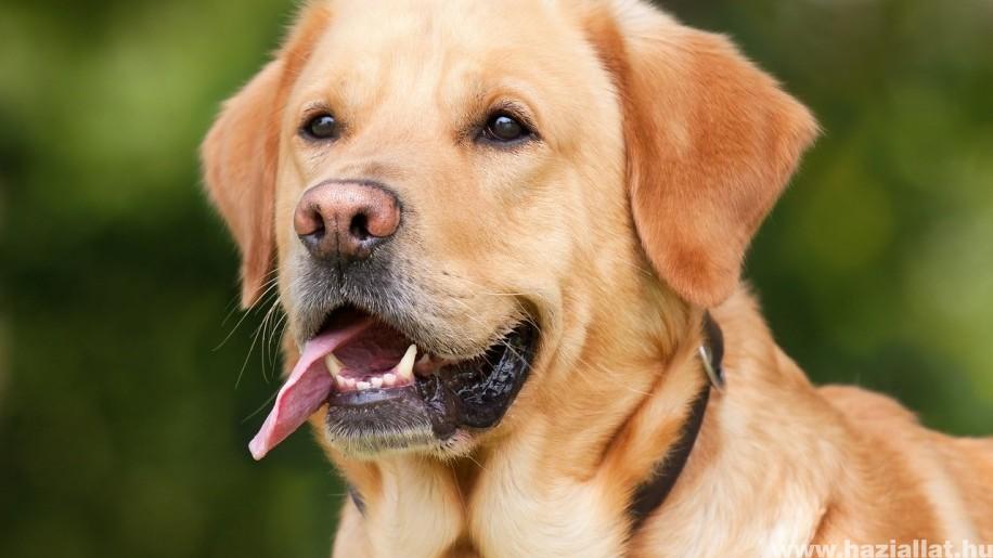 Miért élnek tovább az ivartalanított kutyák?