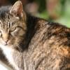 Miért esznek többet az idős macskák?