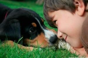 Miért fogadj örökbe és ne vásárolj állatot!