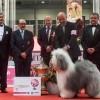 Magyar bobtail lett a világ legszebb kutyája