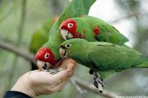 10 jó tanács a papagáj gondozásához