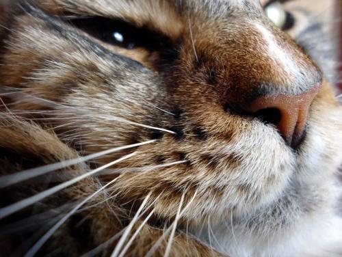 macska_bajusz4