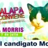 Macska is indul polgármesteri választáson
