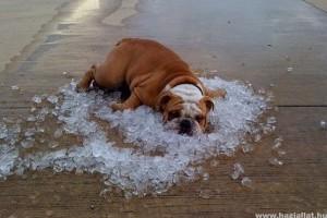 Kedvenceink is szenvednek a melegben!