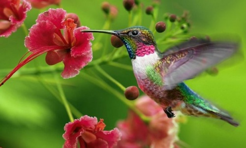 kolibri_nyiregyhaza
