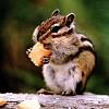 Vipera helyett mókust!