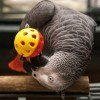 Papagájok: gondozási egyszeregy
