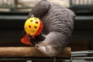 Papagájok: gondozási 1x1