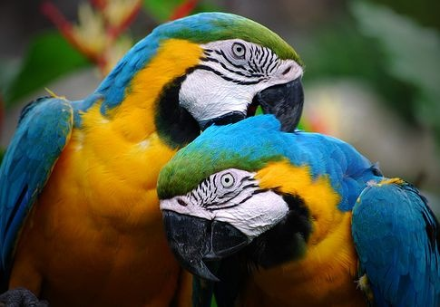 papagaj_tisztalkodik