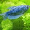 Milyen akváriumba, milyen növényt ültessünk?