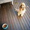 Válogatós vagy ínyenc a kutyád?