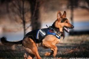 Szellemi leépülésben szenvedőket segítenek kutyák