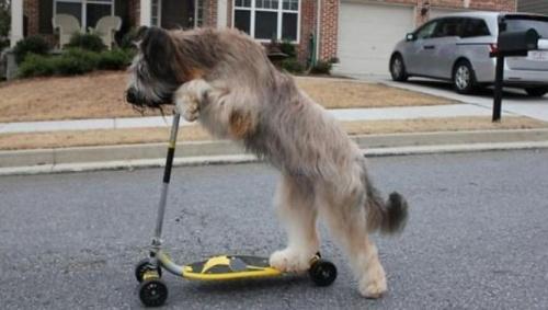 norman_rollerezo_kutya