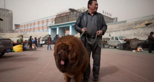 Oroszlánnak állított be kutyát egy kínai állatkert