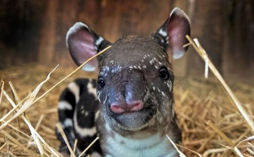tapir-veszpremi-alltkert