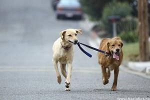 Állatvédelmi járőrszolgálat indul Újpesten