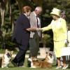 Királyi módra étkeznek a királynő kutyái