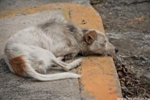 Romániában megszavazták a kóbor kutyák elaltatásáról szóló törvényt
