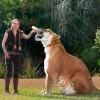 Három méter hosszú és bő 4 mázsa a világ legnagyobb nagymacskája