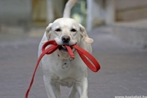 Átfogó ivartalanítási program indul a kóbor kutyák számának csökkentésére