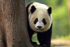 Az állatok veszélyeztetett világa