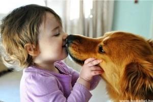 Az állattartás felelősséggel jár