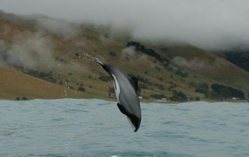 m_delfin2