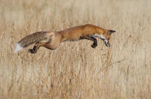 Wildlife Photographer of the Year 2013