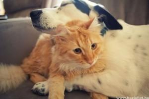 Állatok, akiknek csak egy ölelésre van szükségük