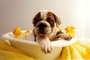 Az első kutyakozmetikai szalon Magyarországon Budán és Pesten is!